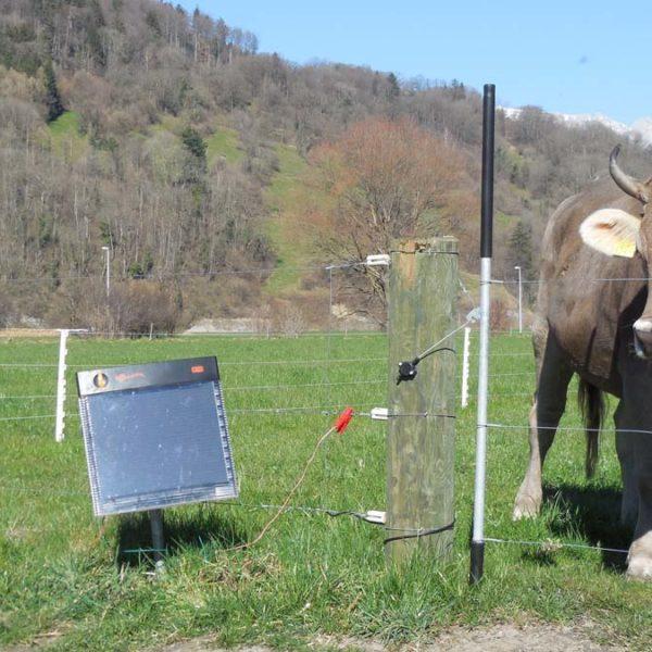 Viehhüter
